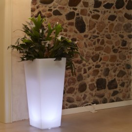 LED-LIGHTED VASE THAN CHEDDAR